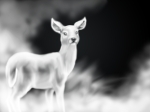 silver doe 2