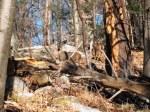 walkwoods 005