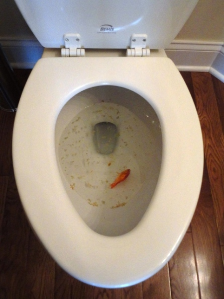 Disturbing Image #1 ~ Fish & food in the big bowl.