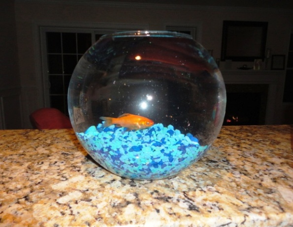Fish 008