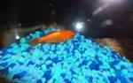 Fish 009